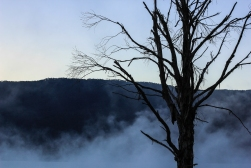 dawn at blowering resevoir, fog lifting. Tumut NSW.